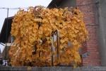 Банско през есента_10