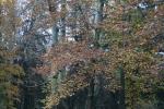 Банско през есента_2