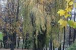 Банско през есента_3