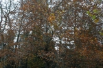 Банско през есента_4
