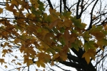 Банско през есента_5
