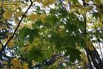 Банско през есента_7